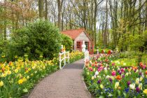 beautiful spring flowers in Keukenhof