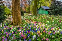 colourful tulips and flowers at groot Bijgaarden