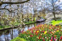 Keukenhof flowers and gardens