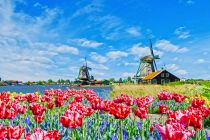 windmills in Kinderdijk with colourful flowers